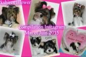 Yorkshires Biewers – compilation Instagram Mai et Juin 2015