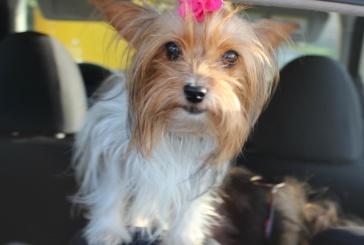 Conseils pour bien voyager en voiture avec son chien
