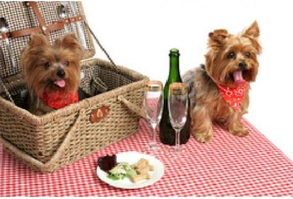 Les intoxications de Noël: les aliments et les boissons