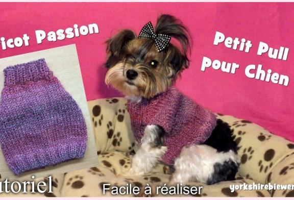 Tutoriel Tricot: Petit Pull à tricoter pour chiens Chihuahuas, ou Yorkshires