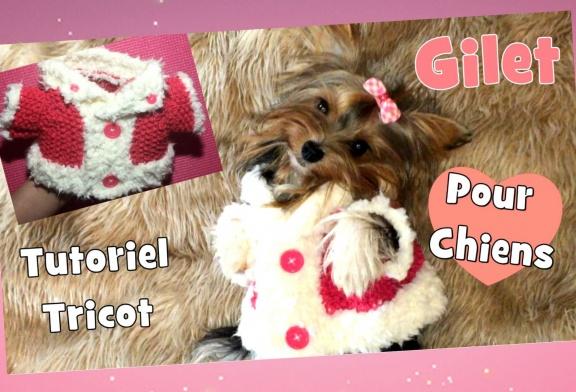 Tutoriel Tricot: Gilet pour petits chiens