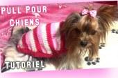DIY Tutoriel Tricot: Manteau pour Chiens, Yorkshires, Chihuahuas