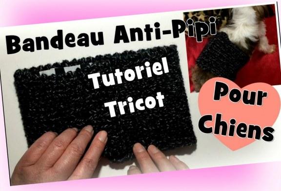 Tutoriel Tricot: Bandeau anti-pipi pour chiens DIY
