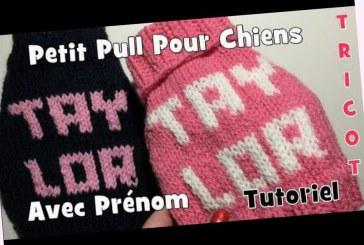 Tutoriel Tricot Pull avec Prénom pour Chiens DIY