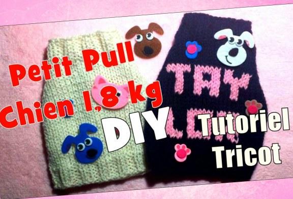 DIY Tricot: Petit Pull pour chiens d' 1,8 kg (taille 3)
