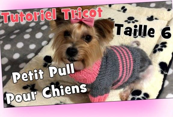 DIY Tricot: Petit Pull pour chiens de' 3,2 kg à 4 kg (taille 6) Tutoriel