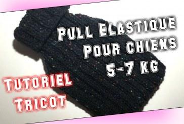 Tutoriel Tricot: Pull Elastique Pour Chiens de 5 à 7 kg (taille 8) DIY
